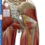 【改善症例8】坐骨神経の圧迫による膝の痛み