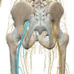 坐骨神経痛はどうして起こるのか? その1