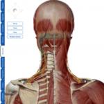 辛い肩コリはなぜ起きる?:その2