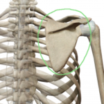 辛い肩コリはなぜ起きる?:その1