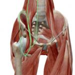 最近多い股関節の痛み。その原因とは?