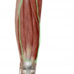 膝の痛みは膝関節にあらず