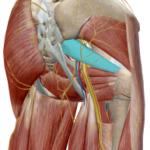 腰からお尻にかけての痛みは首から来てます