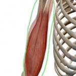 肘の関節の痛みは肘以外の部位に原因があります
