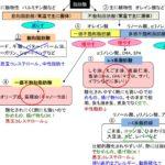 【ダイエット脳を鍛える方法11】n-3系(オメガ3)脂肪酸の特徴とは?